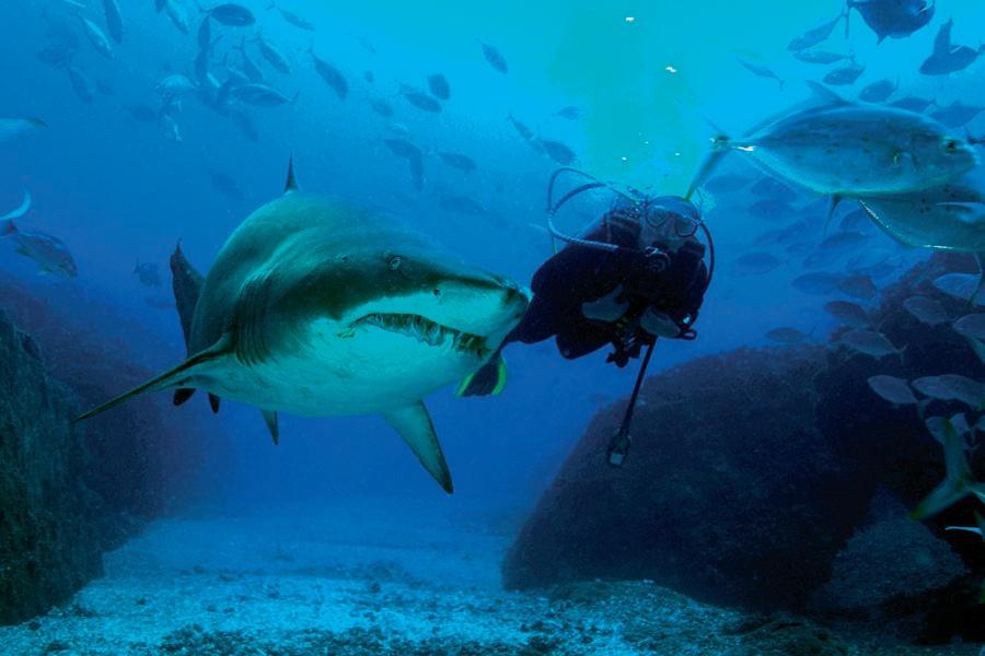 Wolf Rock Dive Report Shark Dive