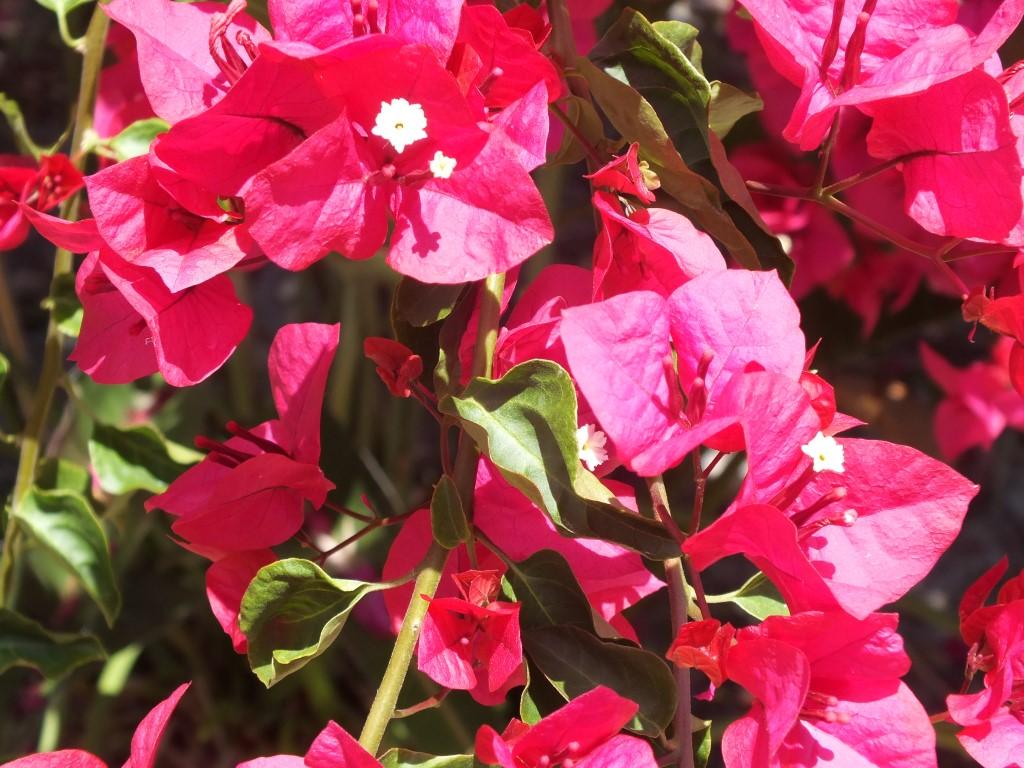 flower show oct 13 (Medium)