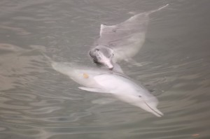 dolphin report