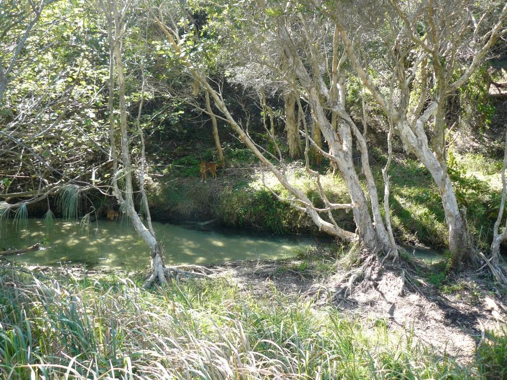 Tide Times Fraser Island September