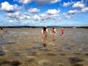 Low tide, Tin Can Bay foreshore - a playground for nature enthusiasts