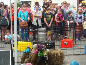 The famous Peak Crossing Mini-Pig Races are coming to town!