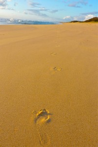 Kerry Leyland's Lone Footsteps was awarded an A Grade Merit