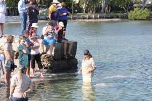 Our Tin Can Bay dolphins were a popular attraction through the holidays, and good numbers of international travellers are visiting daily