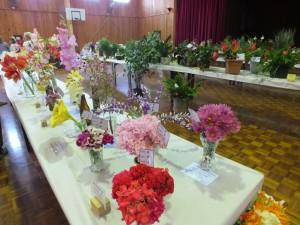 flower show 8 oct 15 023