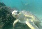 Wolf Rock Dive - Turtle