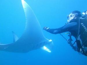 Manta ray season is here