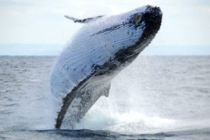 whale watching (2)