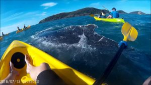 This Epic Ocean Adventures kayak tour got more than they expected!