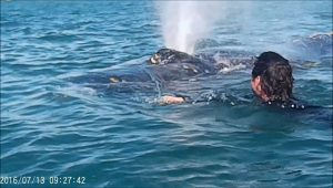 Ty van Santen entered the water to help a passing whale
