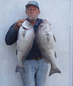 Ron Cox with a couple of big slatey bream that he caught recently in local inside waters