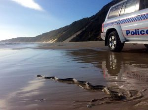 A Sea Snake is only one of the dangerous creatures Police meet in the line of duty