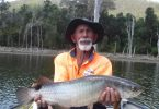 Look at this 60cm saratoga caught by Derek Andrews at Borumba Dam!