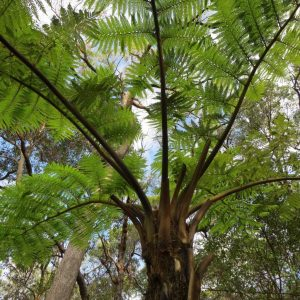 Tree ferns are the topic of the month for City Farm