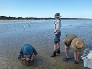 Bonnie Prior and Ian Smith inspect seagrass samples while Cat Shaw looks over to our feathered visitors