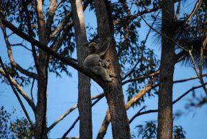 Attend a tree planting in Kia Ora to help our wildlife Image Melissa Jackson