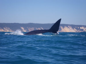 Keeping a lookout for the whales in Rainbow Beach Fishing Comp