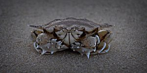 Learn how to get an original shot, like 'Crab' taken by Lyn Minchell, awarded AB Grade Honour