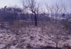 The Rainbow Beach fire of September 1984 leaves the dunes blackened