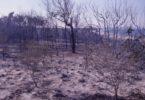 The Rainbow Beach fire of September 1984 leaves the dunes blackened