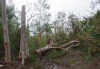 Rainbow Beach Storm Damage to Trees - image Garry Hewitt