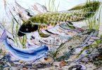 Dorothy Hall - Lungfish & Catfish
