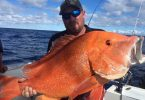 Rainbow Beach Fishing Charters Report - Bau only wanted a legal Red. Now has a new PB to chase