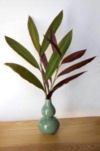 City Farm - Native ginger (Alpinia caerulea)