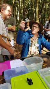 Robert Whyte identifies a tiny spider at Bymien picnic area during the 2019 Cooloola BioBlitz. Photo, Linda Tabe