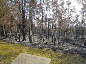 Wildflower Fire 2019 Foreshore Burnt