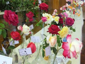 CCLAC - Some of the beautiful blooms on display at the flower show
