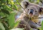 The Wildwatch Gympie is a fantastic site to share animal sightings, the location, the condition of the animals and it is all recorded to help our wildlife
