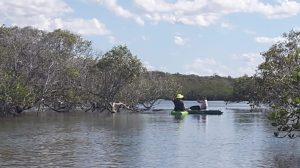 Cooloola Dragons kayaking instead of Dragon paddling.....social distancing of course!