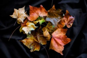 Camera Club - Leaves Still Life, Topaz Finger Painting Filter, photo: Julie Hartwig