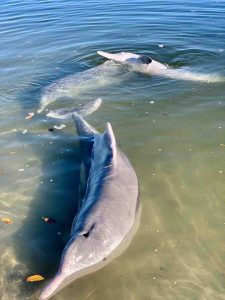 Feeding the dolphins should be on your must-do list when you visit the Cooloola Coast