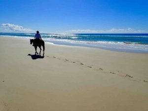Don't wait for 'one day', take a horse ride this holiday and tick it off your bucket list - no experience necessary!