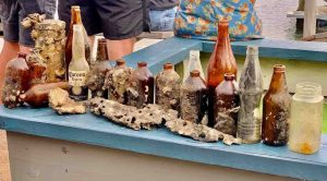 Dolphins - Mystique has been busier than ever this month bringing back all the bottles dumped in the creek at Tin Can Bay Photo: Barnacles Cafe
