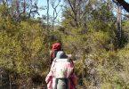 Bushfire review - Image Ellie Boak