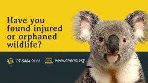 ANARRA Gympie wildlife rescue