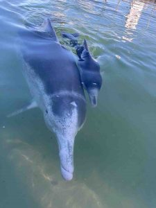 Dolphin - Ella and baby Shadow RIP