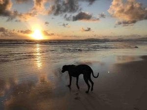 Do we need off-leash dog parks on the Cooloola Coast?